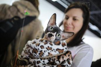 Клуб кошек в москве фауна работа для студентов в екатеринбурге в ночном клубе