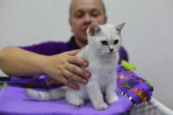 клуб кошек в москве фауна