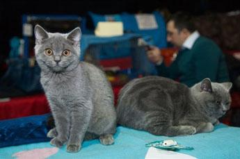 Клуб кошек в москве фауна ночные клубы клина the one