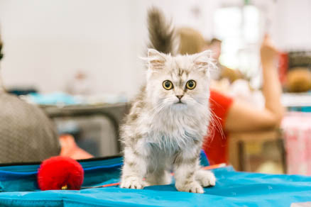 Cat show in Sokolniki Exhibition and Convention Centre