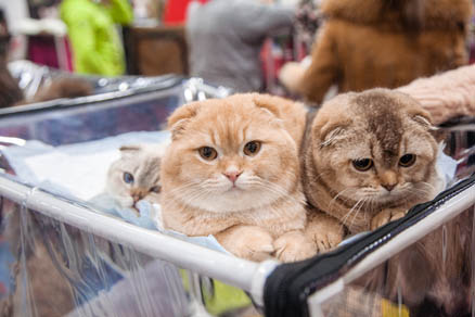 Pet shows in Sokolniki Exhibition and Convention Centre