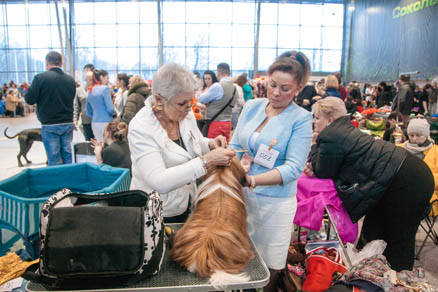 Moscow the Golden Domed all-breed dog show