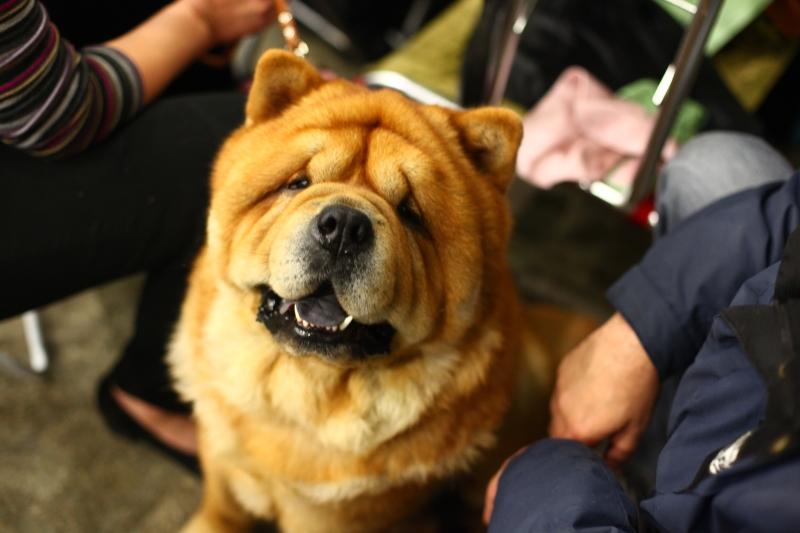 картинки собак всех пород