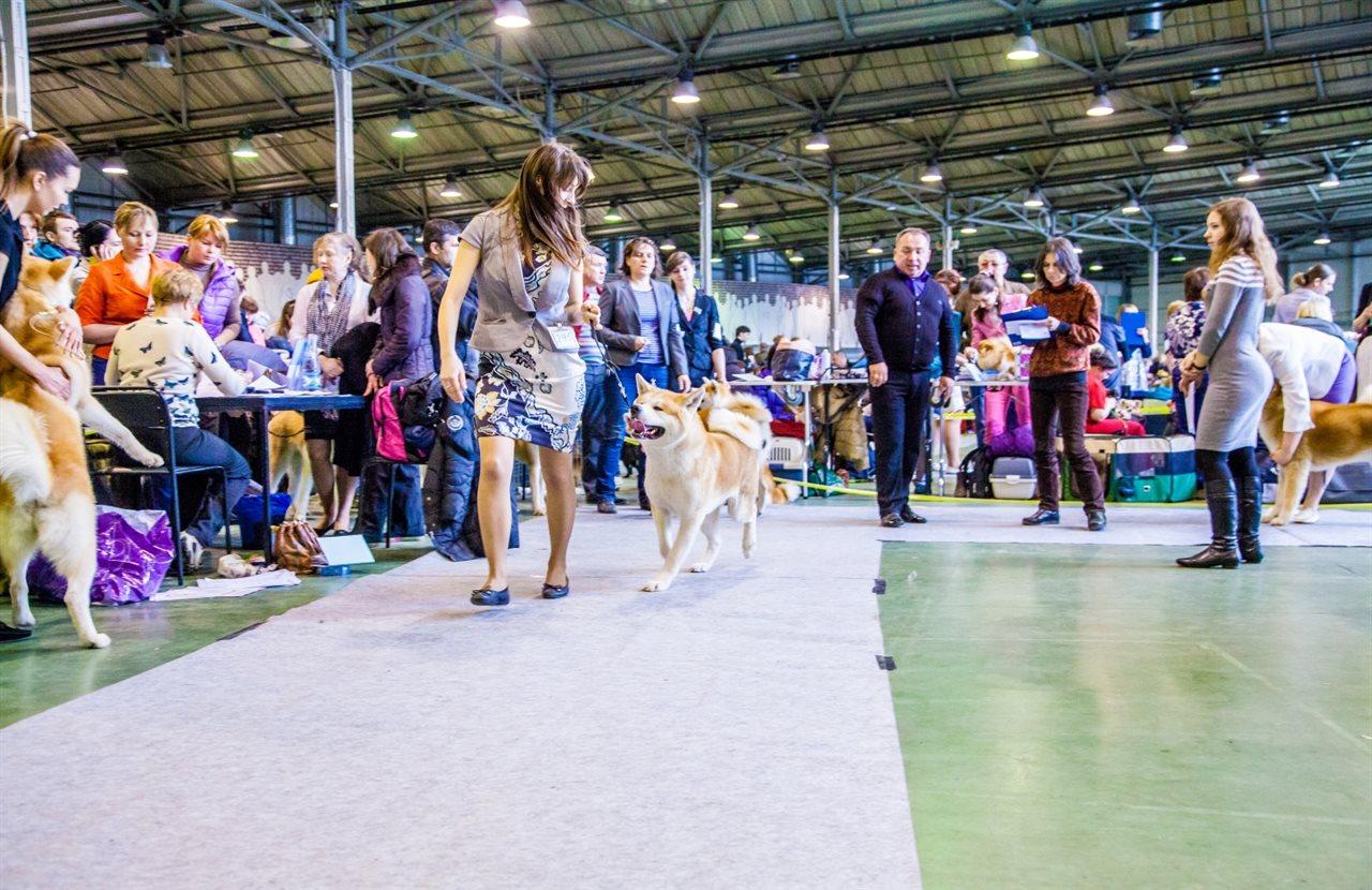 Выставка собак 16 декабря