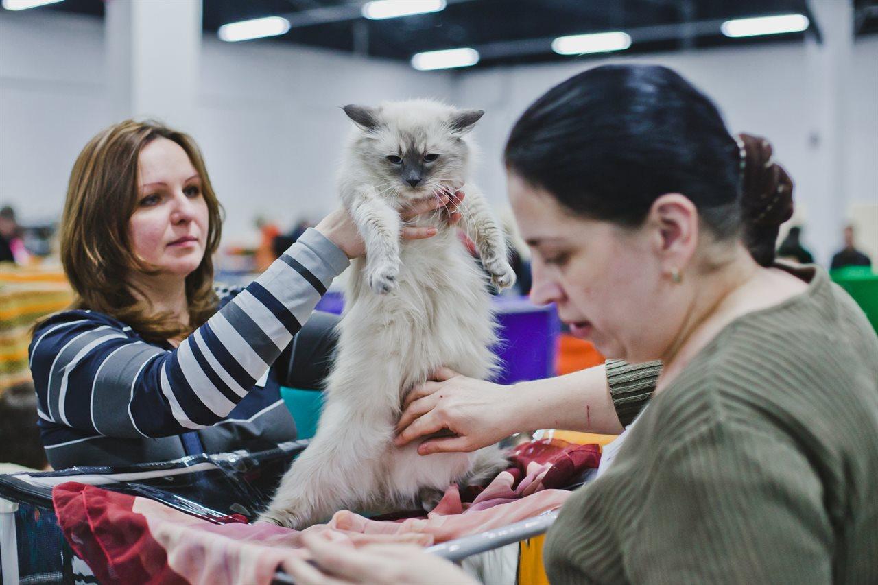 Выставка кошек в новосибирске