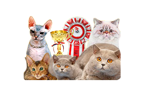 The Mister Cat International Pedigree Cat Show