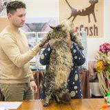 Международная выставка кошек «РосКошная осень в Сокольниках»