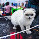 Cat-Salon-March Cat Show