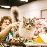 Cat-Salon-August Cat Show