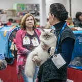 Winter Fairy Tale: cat show in memory of Ludmila Esina