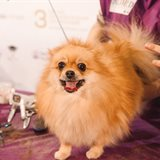 Academic Conference for Dogs and Cats Breeders