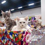 Astra International Cat Show