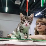 Международная выставка кошек «Валенсия»