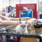 Выставка кошек «Кэт-Салон-Июль»