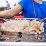 Cat-Salon-July Cat Show
