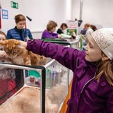 Cat-Salon-April cat show. Sale of kittens of various breeds