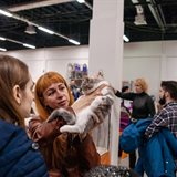 Cat-Salon-April cat show. Sale of kittens of various breeds
