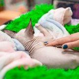 Выставка кошек «Кэт-Салон-Апрель», продажа котят разных пород