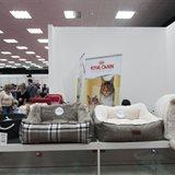 《猫之Show》全品种猫咪展销会