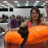 KoShariki Show cat show and kitten sale