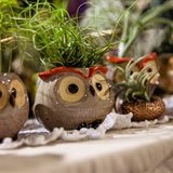 Professional fair of cactus and succulents for home and garden