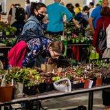 家庭和花园的第一个仙人掌和多肉植物专业展览会