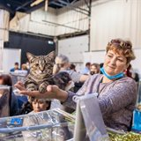 Cat-Salon-September Cat Show