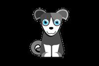 Выставка Новогодний бал для владельцев собак породы шипперке