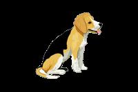 Выставка Выставка собак «ХХ-ШОУ»