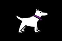 Выставка «Монопородная выставка собак»