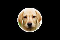 Выставка Всероссийская выставка собак клуба «Антей»