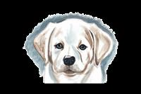 Выставка Выставка собак «Мальтезе»