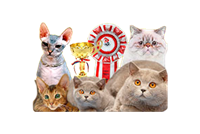 The Best Spring Cat of Russia International Cat Show