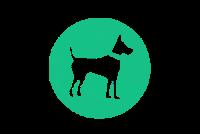 Выставка Выставка собак «РКК»