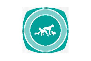 Международная выставка собак СКОР