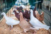 Федеральная выставка голубей «Мы вместе»