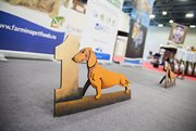 Pet weekend in Sokolniki Exhibition and Convention Centre
