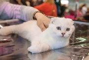 January Cat Salon
