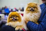 Friendly pets in Sokolniki