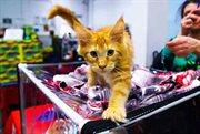 Spring Cat-Salon held in Sokolniki