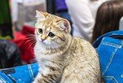 Cat show held in Sokolniki