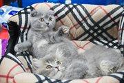 Cat show in Sokolniki Exhibition and Convention Centre