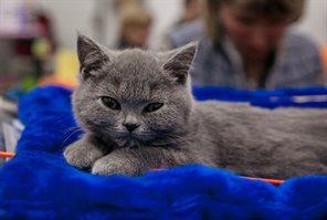 Осенняя выставка кошек
