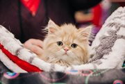 International pet shows in Sokolniki Exhibition and Convention Centre