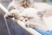 В Сокольниках прошла выставка кошек