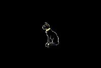 Выставка Выставка-продажа котят и щенков «Бастет-Шоу»