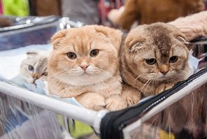 Выставки домашних животных состоялись в КВЦ «Сокольники»