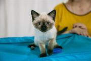 Выставка-продажа котят состоялась в Сокольниках