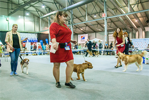 International dog show in Sokolniki Exhibition and Convention Centre