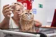 Выставка кошек «КоШарики Шоу» в КВЦ «Сокольники»